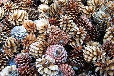 Free Pinecones Royalty Free Stock Image - 8333326