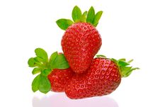 Free Three Delicious Strawberries Stock Images - 8334034
