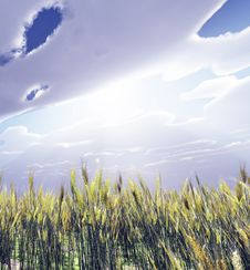 Free Wheat Field Royalty Free Stock Image - 8335306