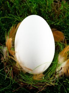 Free Easter Egg Royalty Free Stock Photo - 8336965