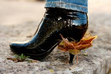 Free Heel With Leaves Royalty Free Stock Photos - 8338078