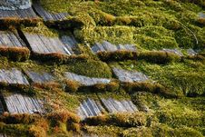 Free Mossy Shingles Stock Images - 8338504