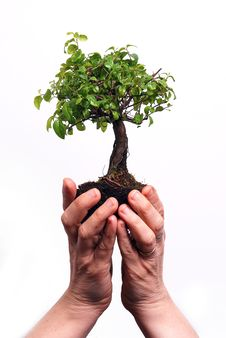 Free Hands Holding A Bonsai Tree Royalty Free Stock Images - 8338529