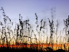 Free Sunset Grass Royalty Free Stock Image - 8338816