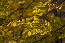 Free Autumn Branch Royalty Free Stock Image - 8339326