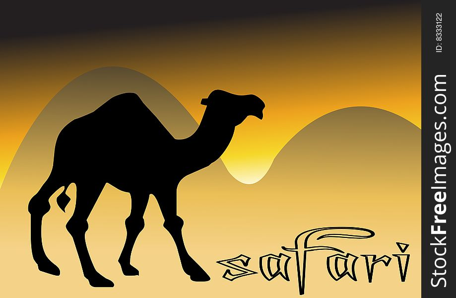 Camel In Desert Sunset - Free Stock Images & Photos ...