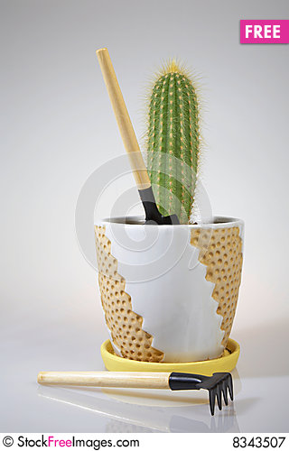 Cactus and Hand Gardening Tools Stock Photo