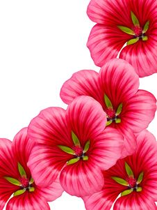 Flowers With Red Petals Royalty Free Stock Photography