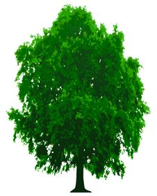 Free Vector Tree Royalty Free Stock Photo - 8340355