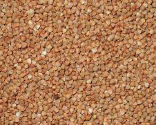 Buckwheat Background Royalty Free Stock Image