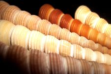 Free Spiral Shells Stock Photo - 8340640