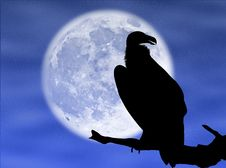 Free Eagle In The Moon Stock Images - 8340654