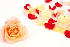 Free Petals Of Roses Royalty Free Stock Image - 8341376