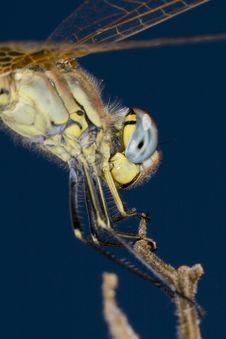 Macro Of A Dragonfly Stock Photos