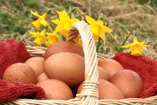 Free Eggs In Basket With Daffodils Stock Photo - 8341660