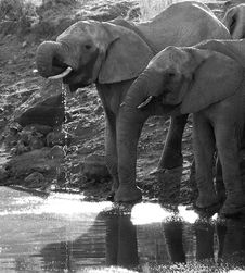 Elephant At The Waterhole Stock Images