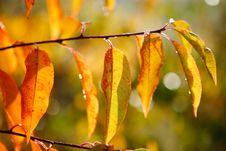Free Leaf Stock Images - 8342874