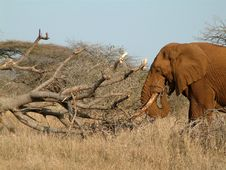 Free Elephant And Fallen Tree Stock Images - 8342944