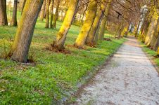 Free Park Royalty Free Stock Photography - 8343177