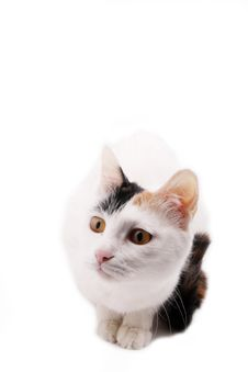 Free Cute Cat. Royalty Free Stock Image - 8343286