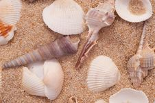 Free Seashells On The Sand Royalty Free Stock Image - 8343536