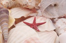 Free Seashells In Closeup Stock Photography - 8343542