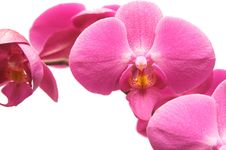 Free Orchid Stock Images - 8344634