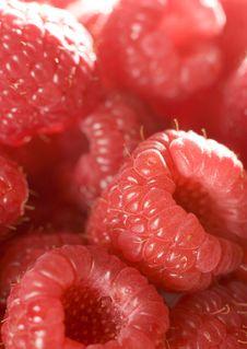 Free Raspberries Royalty Free Stock Images - 8346139