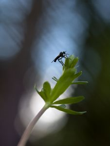 Free Resting Fly Royalty Free Stock Photo - 8346185