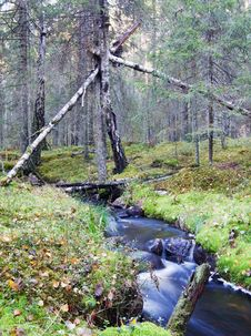 Free Forest Steram Stock Image - 8347131