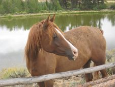 Free Horse By A Pond Royalty Free Stock Photo - 8349005