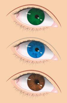 Free Vector Eye Stock Photo - 8349470