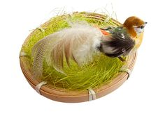 Free A Bird In The Nest Royalty Free Stock Photography - 8350497