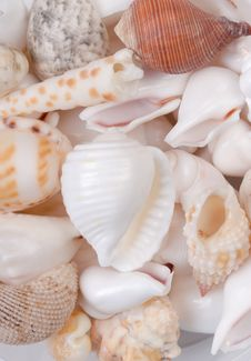 Free Colorful Seashells Royalty Free Stock Images - 8351359