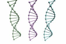 Free 3D Model Of DNA Structure Stock Photo - 8351760