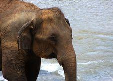 Free Elephants Stock Photo - 8352600