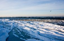 Cold Sea And Seagull Royalty Free Stock Images