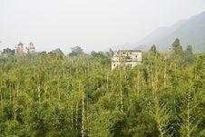 Free Bamboo Grove Stock Photography - 8353252