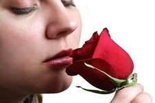 Free Woman Sniffing Red Rose Stock Photos - 8353663