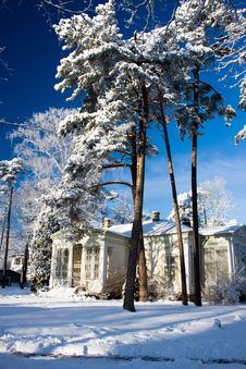 Free House In Pine Forest Royalty Free Stock Photos - 8354368