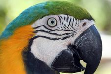 Free Macaw Parrot Royalty Free Stock Image - 8356466