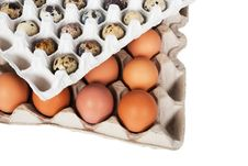 Free Eggs In The Package Stock Photos - 8356983