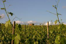 Free Tuscan Vineyard Royalty Free Stock Photography - 8357597