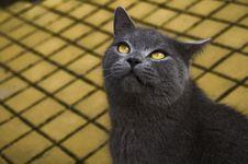 Free Cat Stock Photos - 8357813