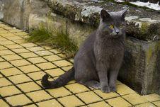 Free Cat Stock Photography - 8357902