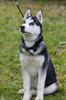 Free Dog Stock Image - 8358271