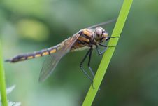 Free Dragonfly Royalty Free Stock Photography - 8358617