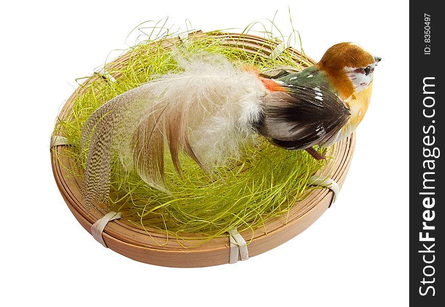 A bird in the nest