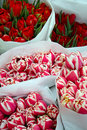Free Bouquets Of Tulips Royalty Free Stock Photography - 8362217