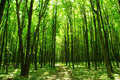 Free Green Forest Royalty Free Stock Image - 8366416